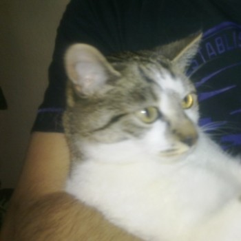 Profilbild von Felix