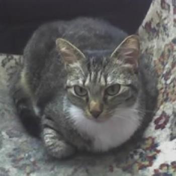 Profilbild von Maus