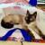 Profilbild von † Silla (Milhousilla)