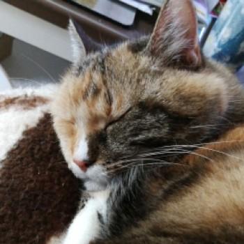 Profilbild von † Trixie