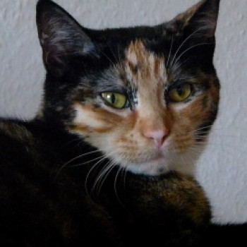 Profilbild von Serafina