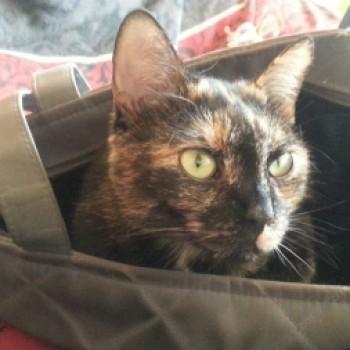 Profilbild von Pippi
