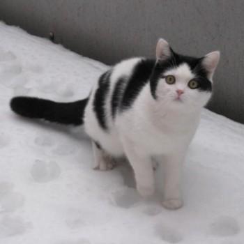 Profilbild von Stupsi