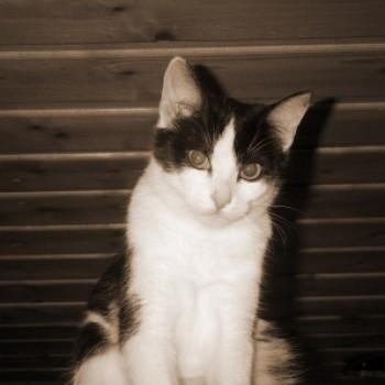 Profilbild von Niki