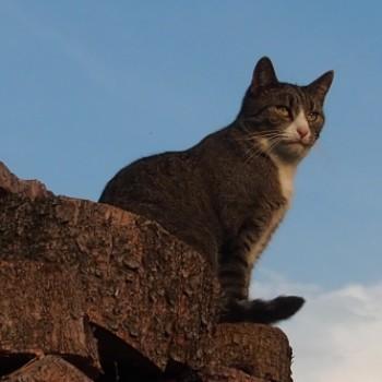 Profilbild von Petra