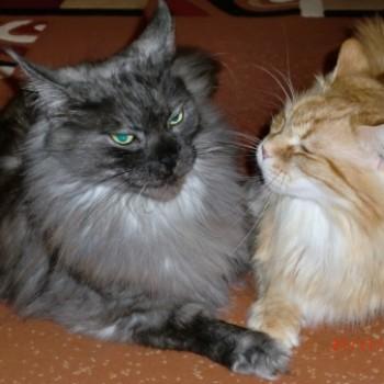 Profilbild von Elvis und Willy