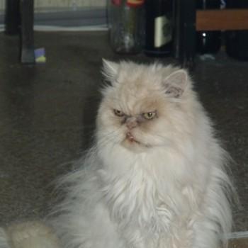 Profilbild von † Balou
