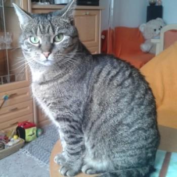 Profilbild von Mieze Lou