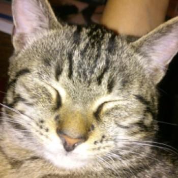 Profilbild von Miaugli