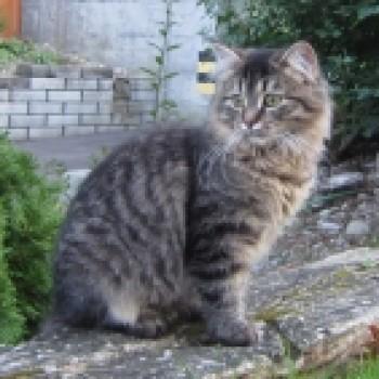 Profilbild von † Lisenka