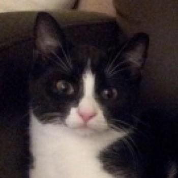 Profilbild von Fips