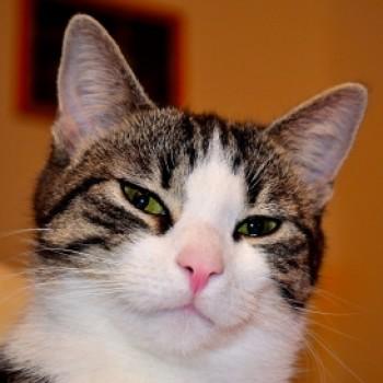 Profilbild von Kila