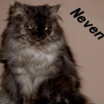 Profilbild von Neven