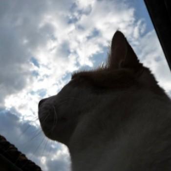 Gruppenlogo von Katzenhimmel - Erinnerungen