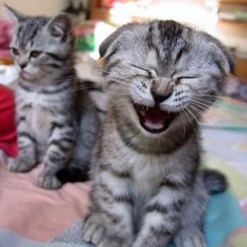 Gruppenlogo von Die besten Katzenwitze :-)