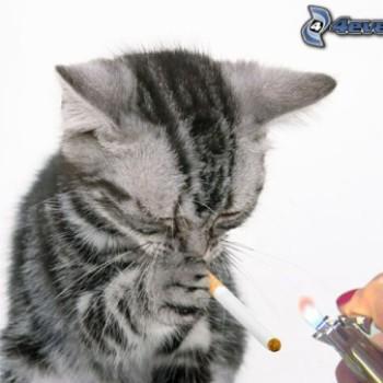 """Gruppenlogo von """"Bitte Rücksicht - wir Fellnasen sind Nichtraucher!"""""""