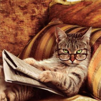 Gruppenlogo von Die politisch interessierte Katze