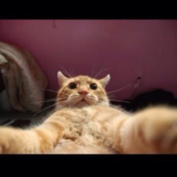 Gruppenlogo von Katzen Selfies