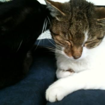 Gruppenlogo von Katzen-Kultur-Kiste