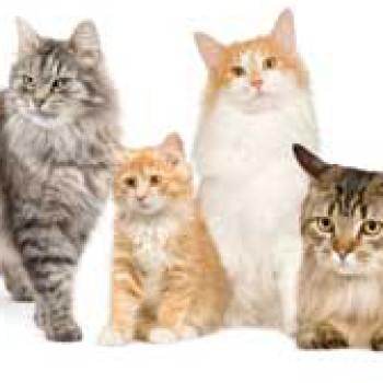 Gruppenlogo von Katzenrassen