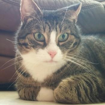 Gruppenlogo von Cat-LEID-oskop