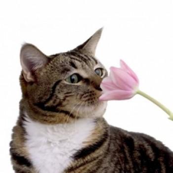 Gruppenlogo von Pflanzen für Katzen