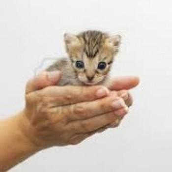 Gruppenlogo von Tierschutz geht uns alle an!