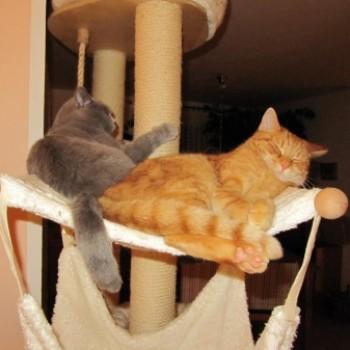 Gruppenlogo von Wie schön es ist mit Katzenfreunden zu leben