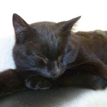 Gruppenlogo von Für alle schwarzen Katzies - wunderschöne Lackfellchen