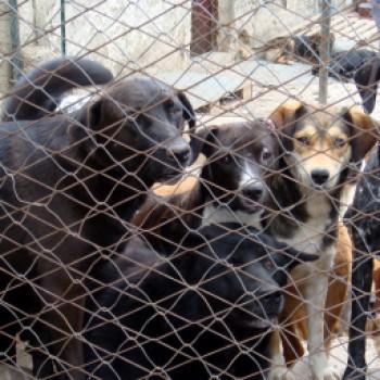 Gruppenlogo von gegen tierquälerei