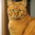 Gruppenlogo von Geschichten von Katzen für Katzen