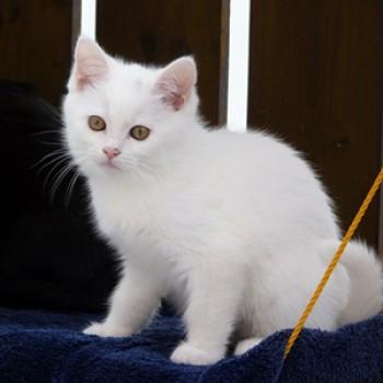 Gruppenlogo von Für alle weißen Katzen - Weißfellchen