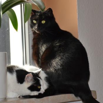 Gruppenlogo von Catsitting
